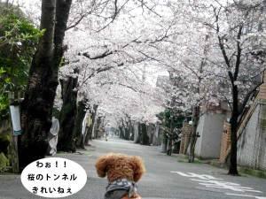 0401jurakusou