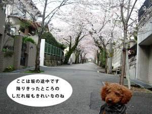 0401jurakusou2