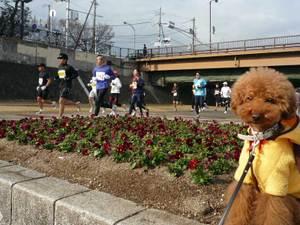 23marathon4