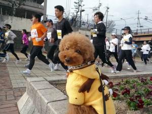 23marathon5dossari