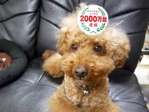 22suzuki2