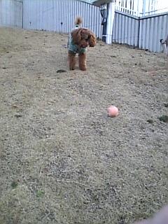 お気に入りのボール遊び